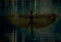 Takılı kalmış kelebektim ruhuna - I was a butterfly which was placed on your soul - 125 x 190 cm - 2011 - Paris